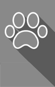 Huisdieren